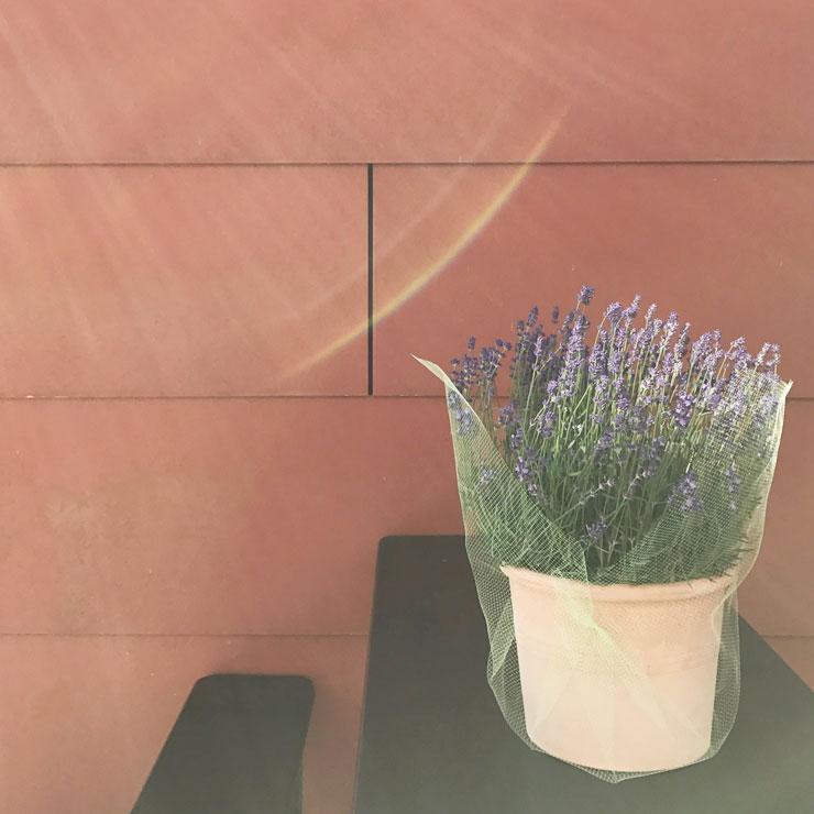 plog 14 juni 2017 lavendel