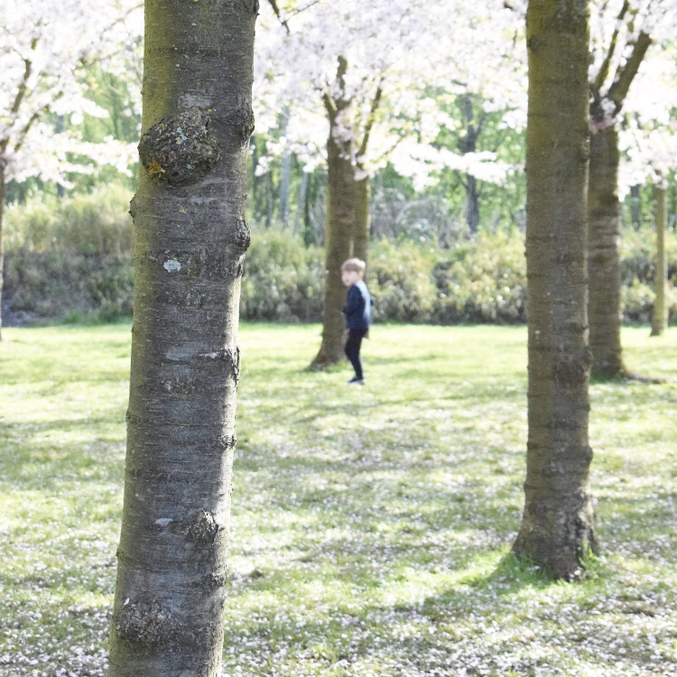 amstelveen bloesempark javian boom