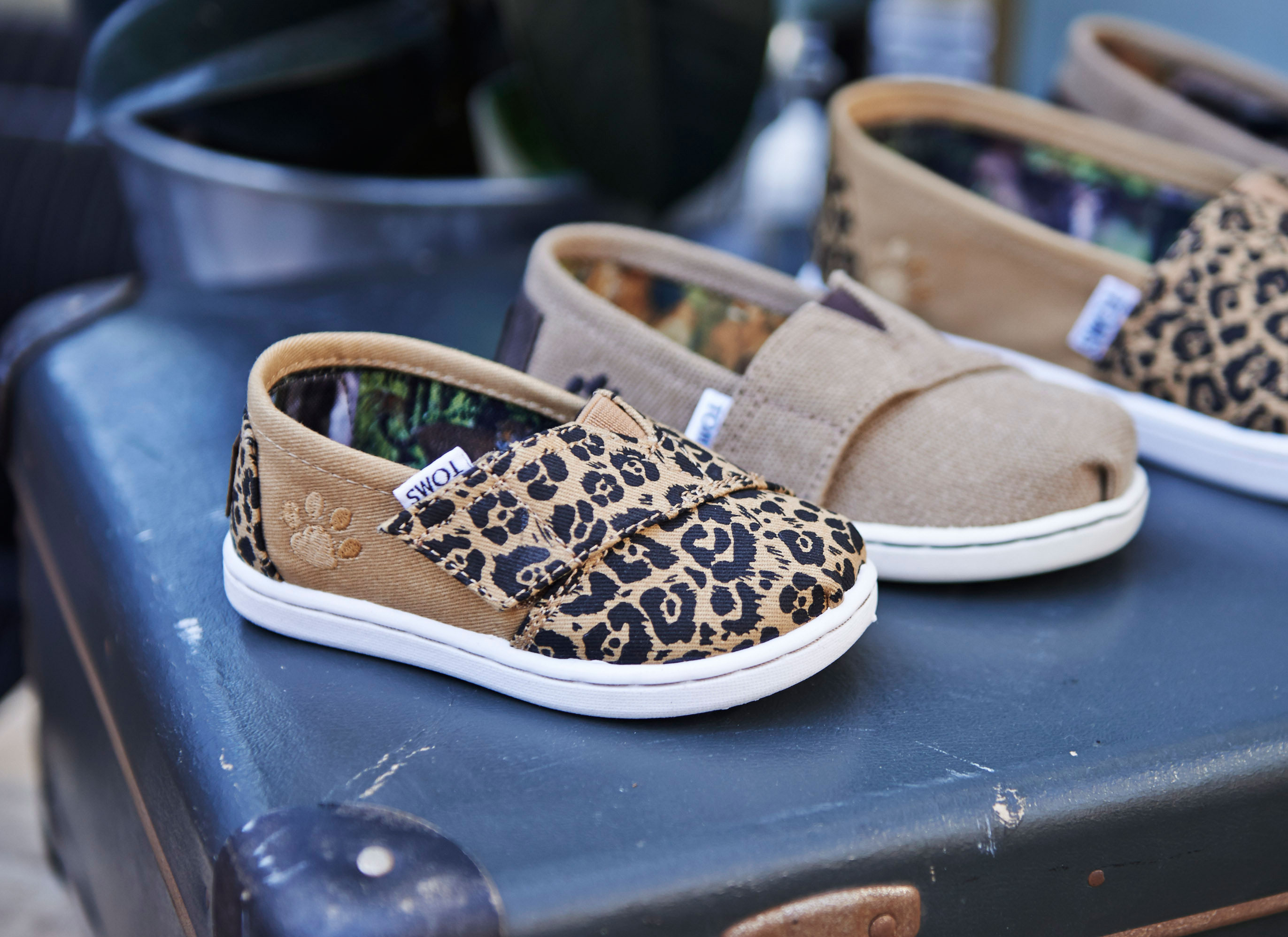 big cats collection toms national geographic big cats - kinderschoenen toms