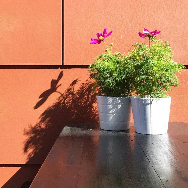 project-tuinset-verven-zwarte-beits-bloemen-resultaat