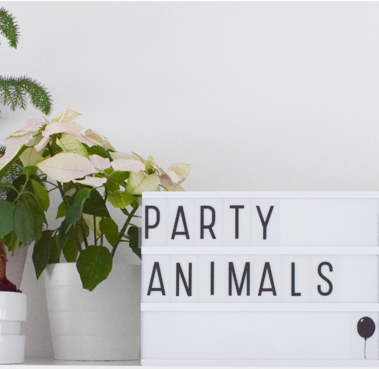 senne wild one party jungle feest lightbox party animals